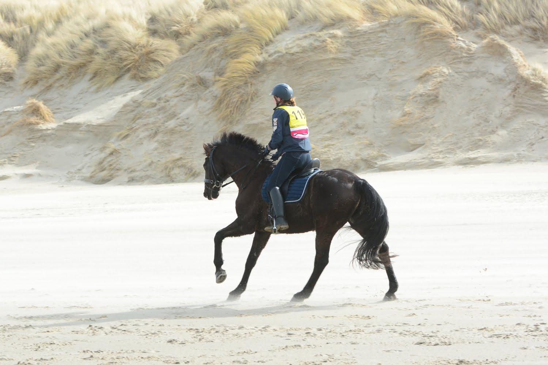 Paardrijden Endurance